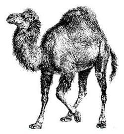 perl_camel.jpg